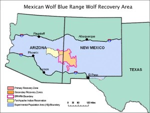 Mexican Wolf Blue Range Wolf Recovery Area
